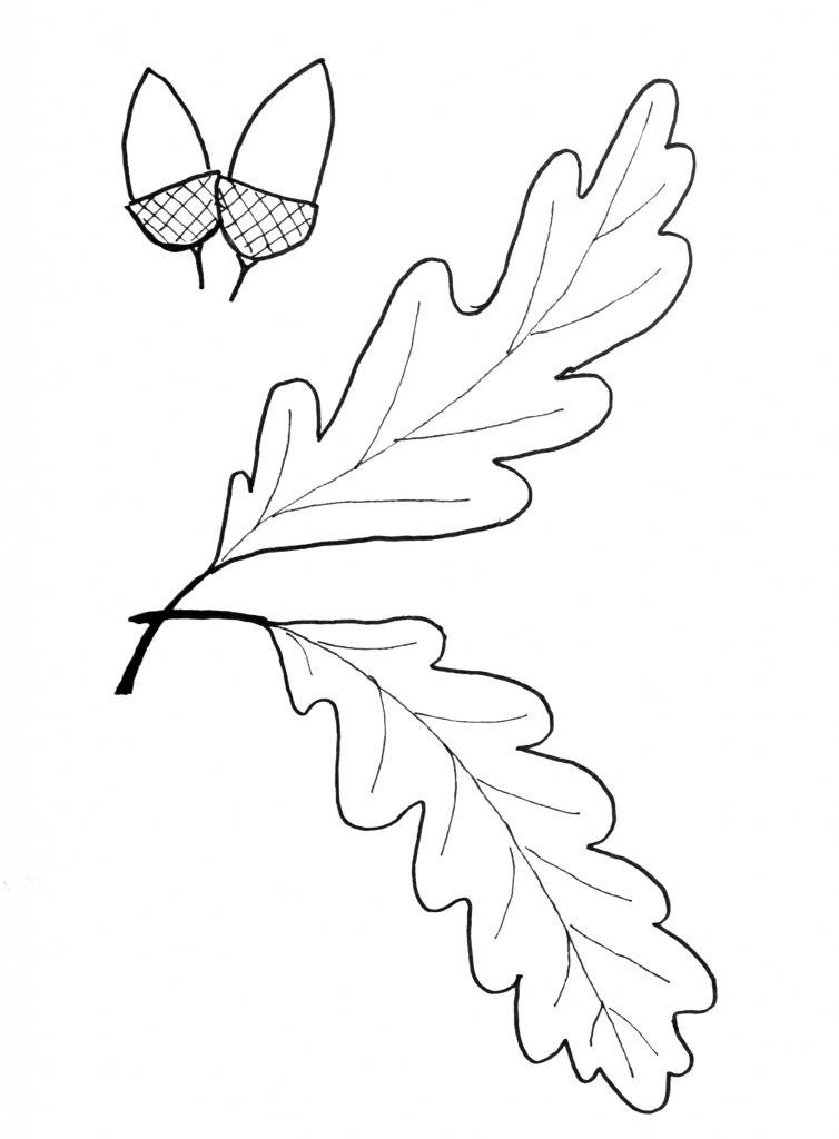 Fall Leaf Pattern Printables  Oak Leaves Leaves And Patterns