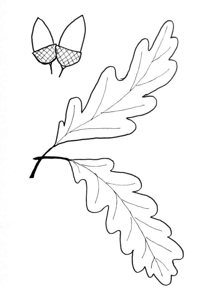 Fall Leaf Pattern Printables | Pinterest | La hoja, Roble y Hoja