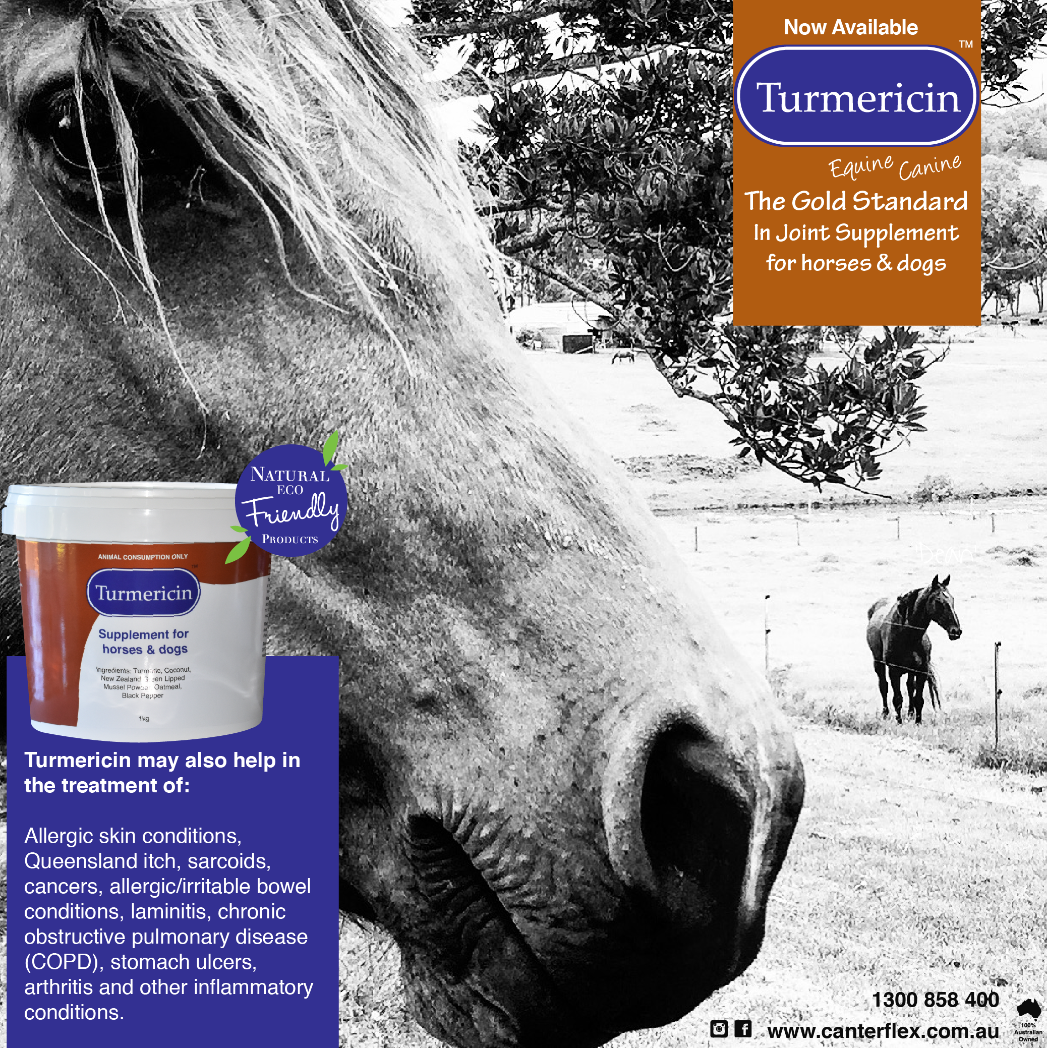 Turmericin For Horses Dogs Allergic Skin Conditions Queensland Itch Sarcoids Cancers Allergic Irritable Bowel Stomach Ulcers Horses Arthritis