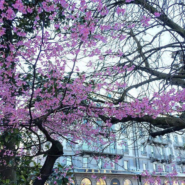 Good morning #igers ! ☀️ Have a nice day!  #happymonday #happymood #sunshine  #beautiful #flowers #flowerlovers #love #prada #luxe #luxury #geneva #mygeneva #swissblogger