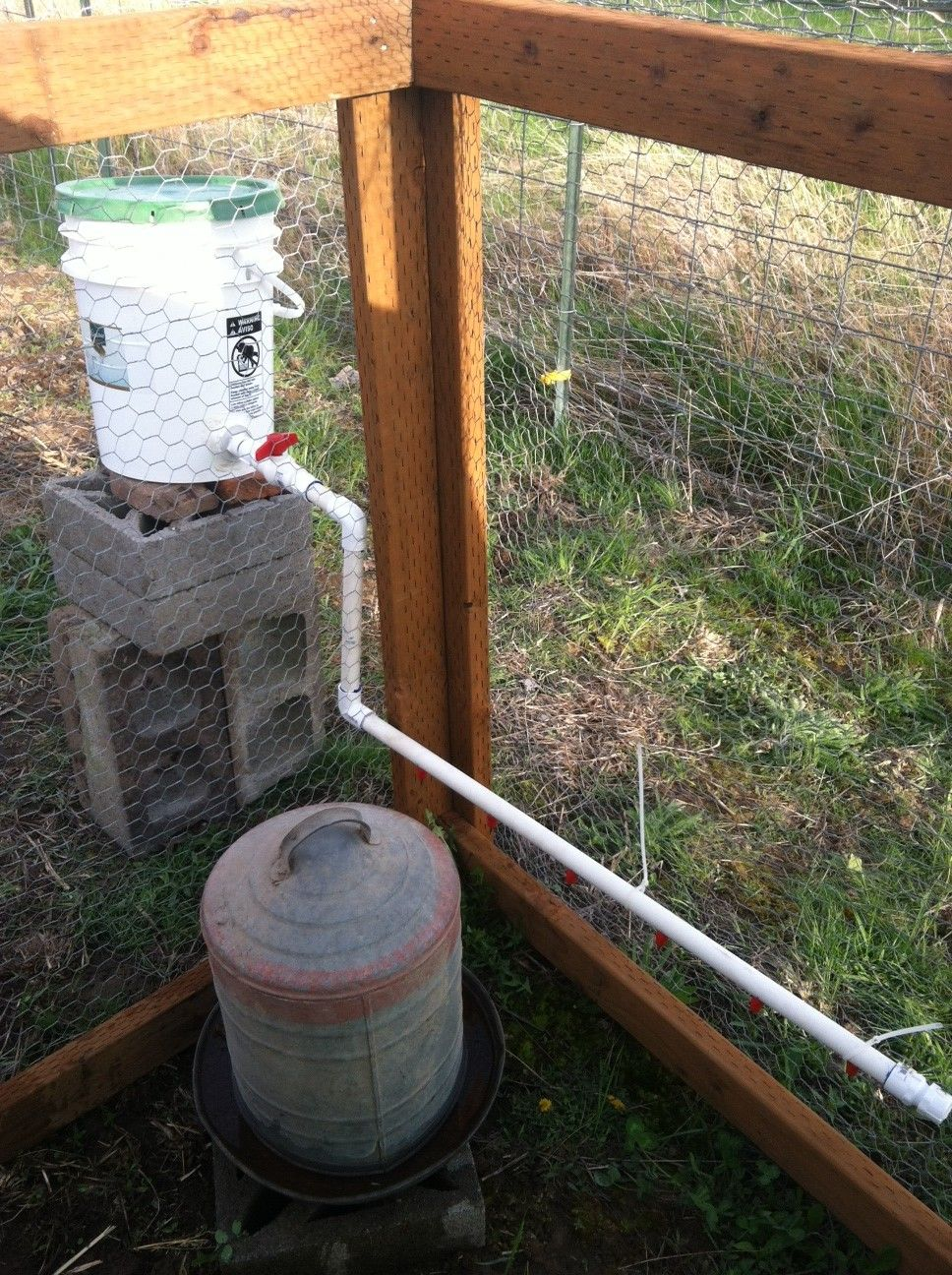 Thorough instructions on making pvc pipe or 5 gallon bucket watering systems for chickens!