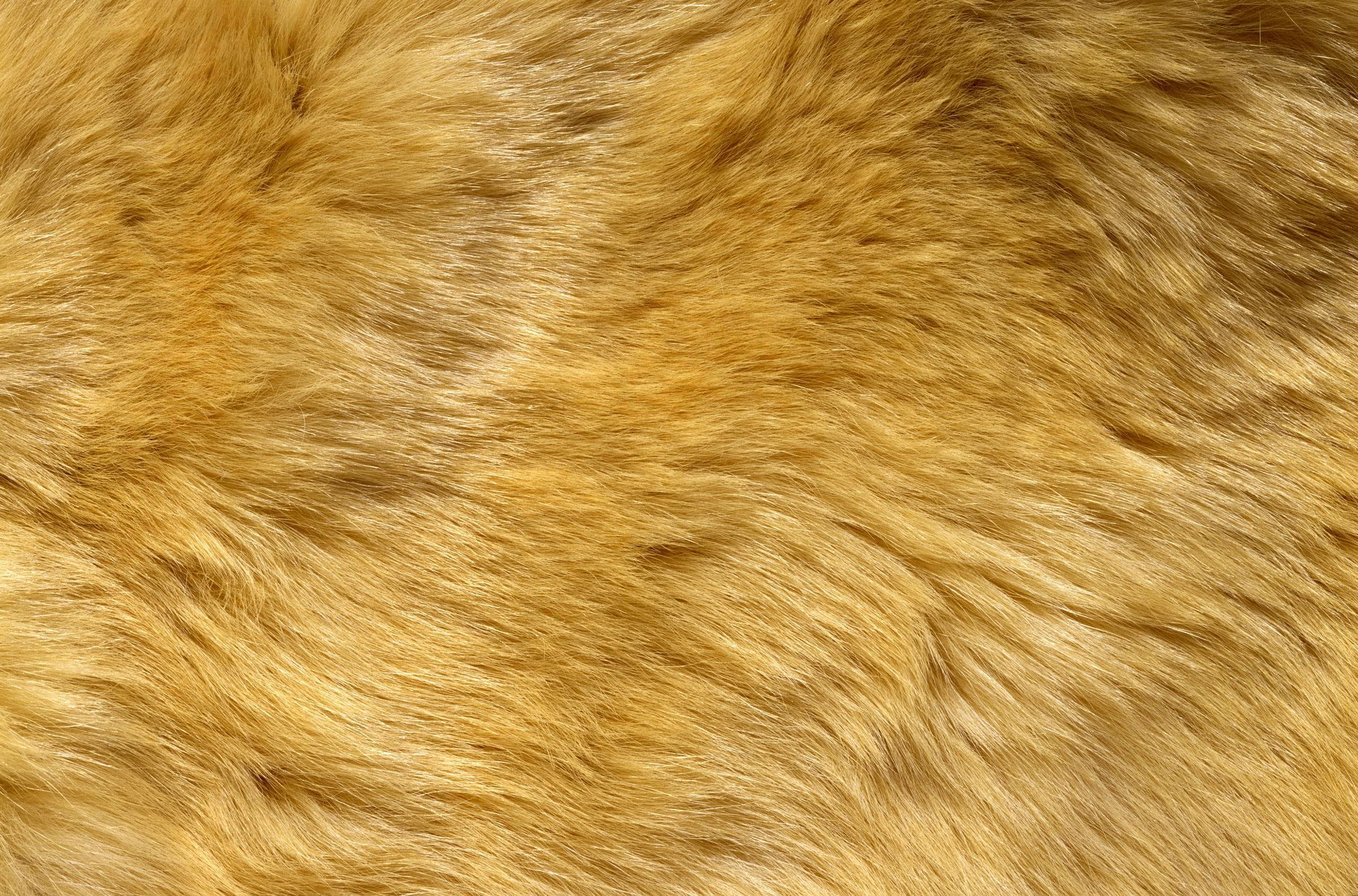 texture fur animal background - photo #2