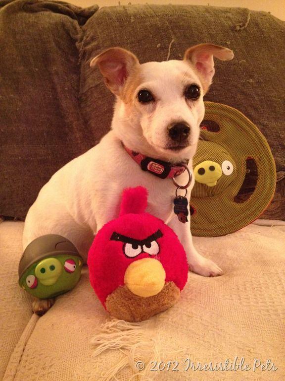 Irresistible Pet Pics Sadie And Benny