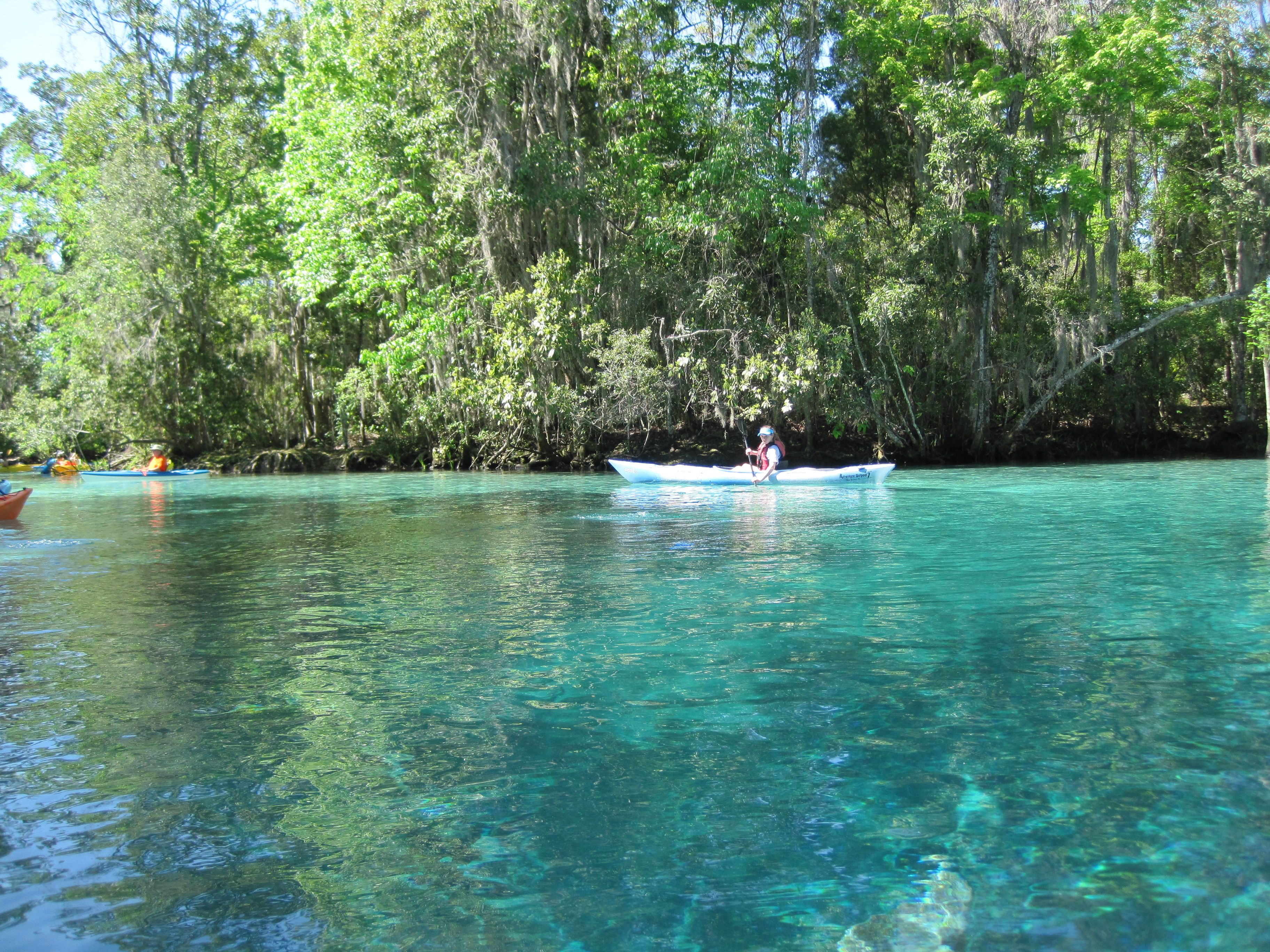 Crystal Springs Florida Went Swimming With The Manitee Beautiful Places Vacation Places Florida City