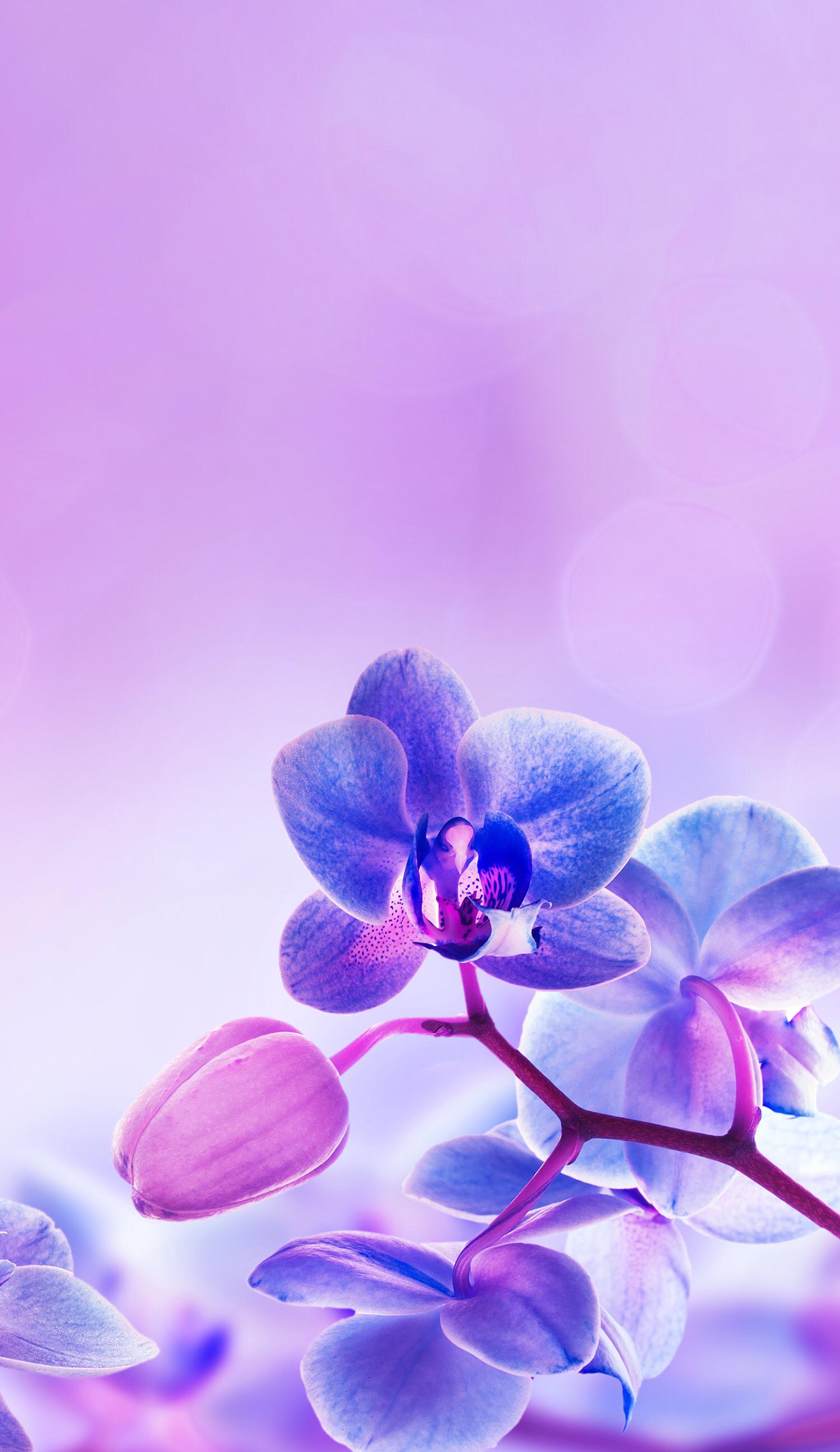 Light Purple Background Flowers