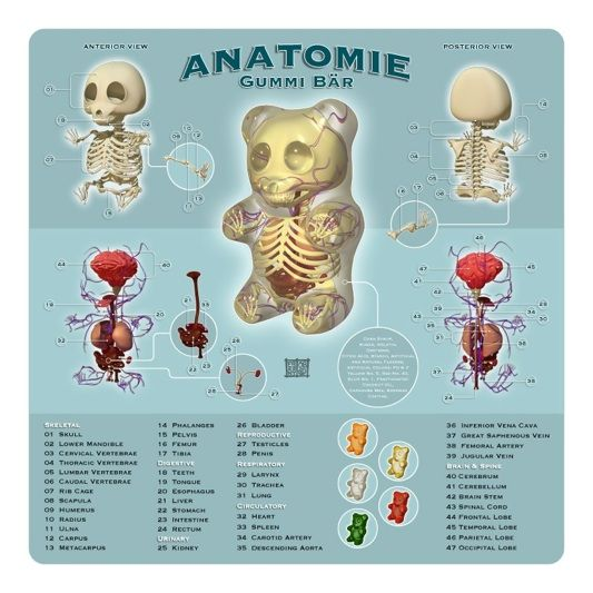 Anatomie Gummi Bär poster by Jason Freeny.   junk drawer   Pinterest