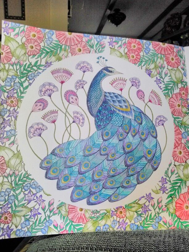 Finished Last Night K M Peacock Millie Marotta Animal Kingdom Coloring Book