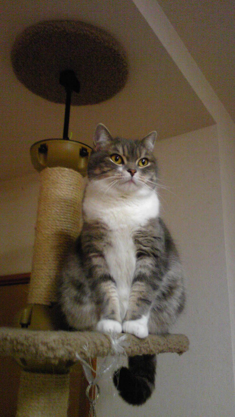 Cat atop a scratching post.
