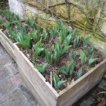 Pots and Planters | The Enduring Gardener