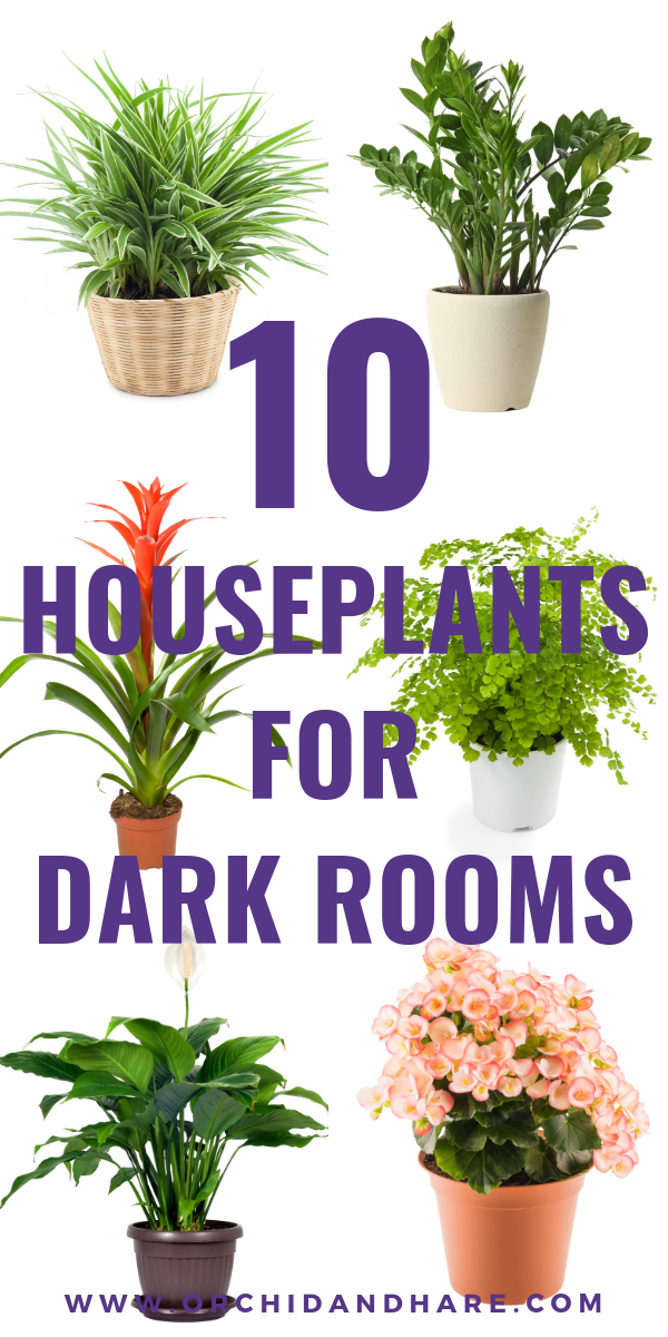 10 Low Light House Plants Indoor Plants That Grow Without Sunlight Low Light House Plants Easy House Plants Easy Plants To Grow