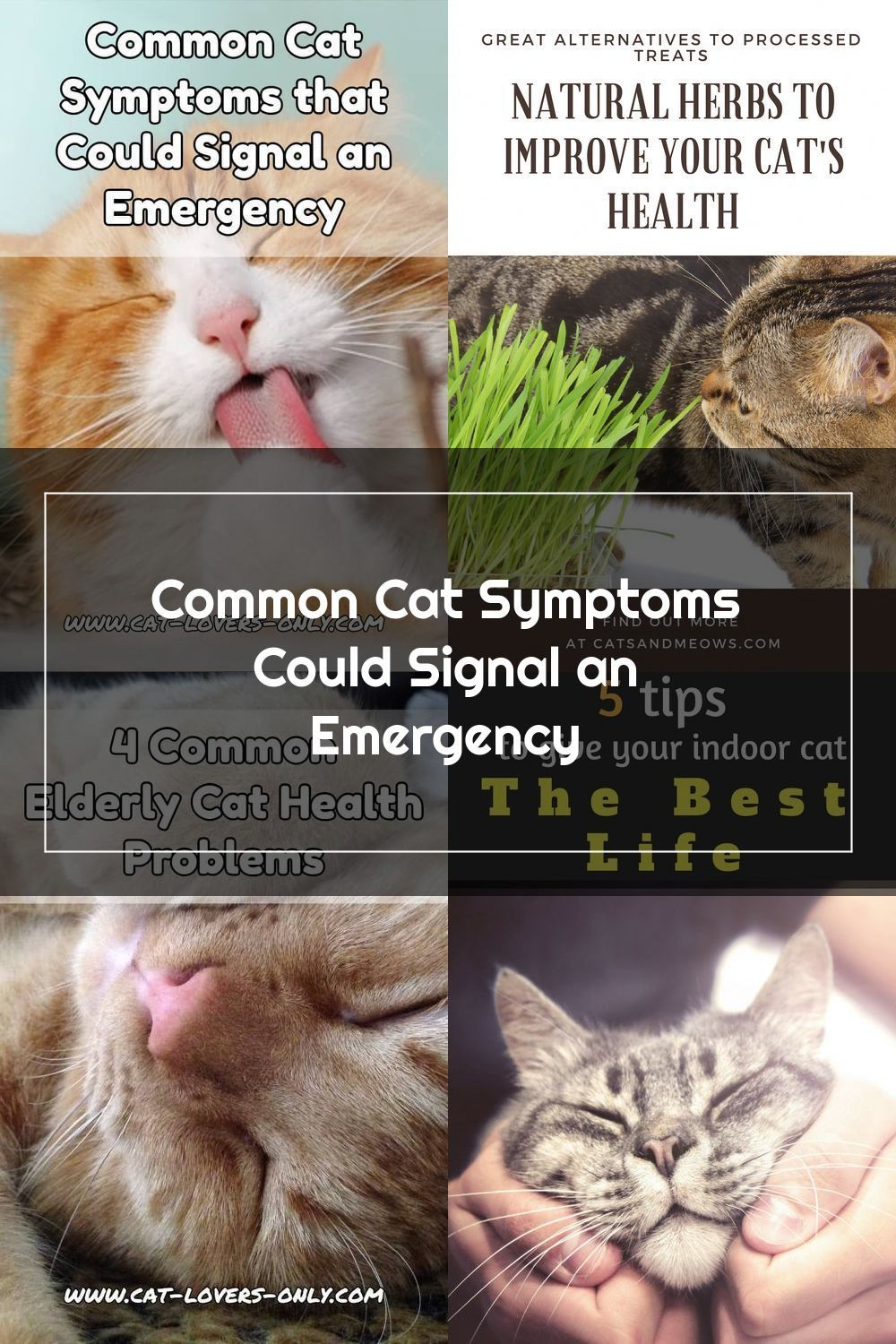 Pin On Cat Breeding And Health Care