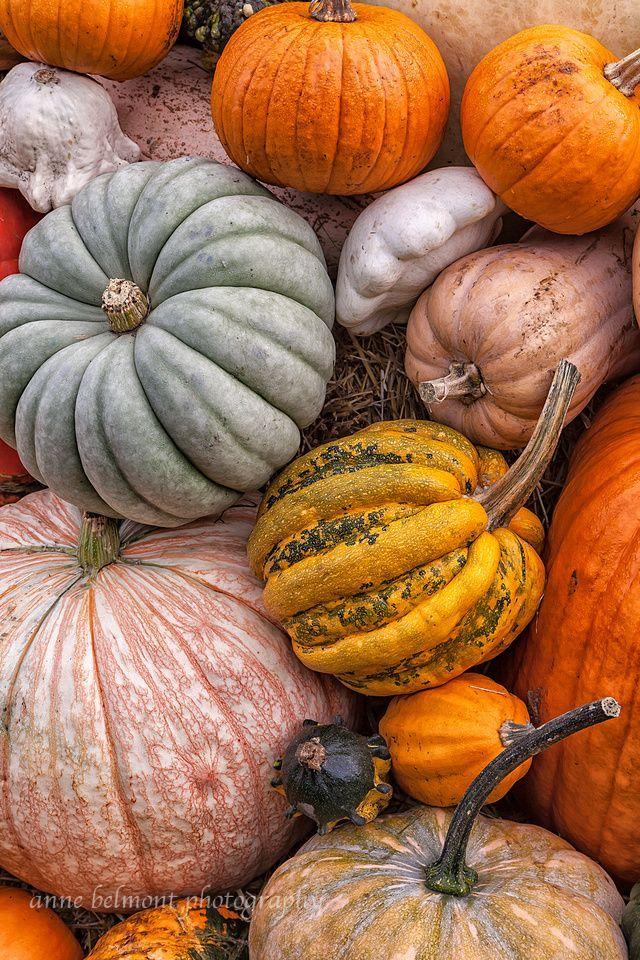 Pumpkins – Day 127
