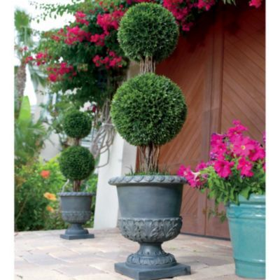 Podocarpus Double Ball Topiary Outdoor Topiary Topiary Tuscan Home Decorating