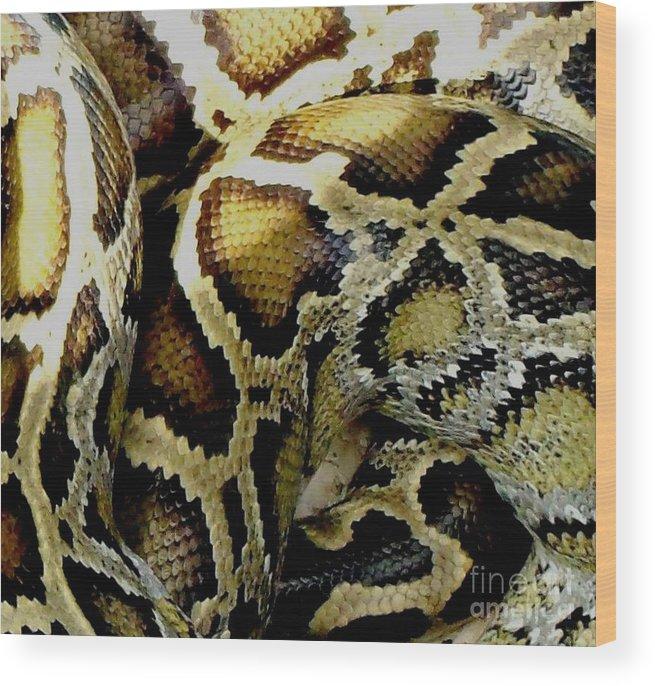 boa constrictor skin Google Search Boa constrictor