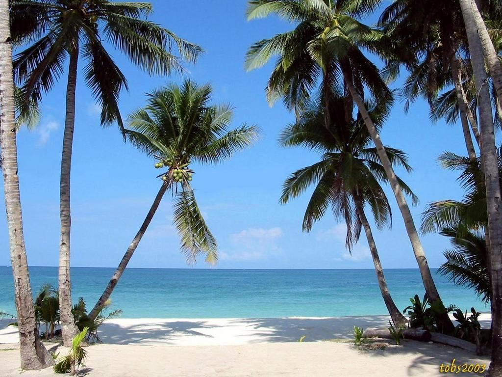 Tropical Beaches With Palm Trees Wallpapers Desktop