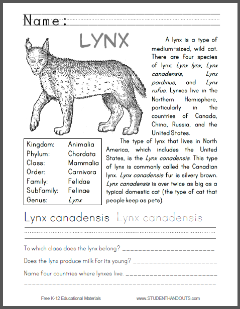 Lynx Canadensis Primary Worksheet Great For Learning