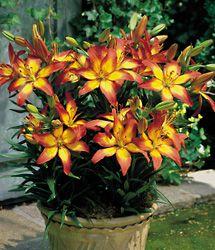 Designing A Lily Garden on design your garden, japanese zen garden, flower garden, designing an office,