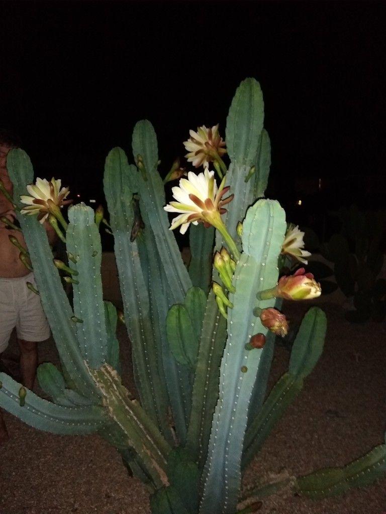 Pin By Fausto Channave On Cactus Garden Plants Cactus Garden Garden