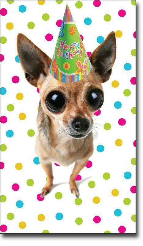 56de1897 Happy Birthday Chihuahua, Happy Birthday Dog, Happy Birthday Quotes, Belated