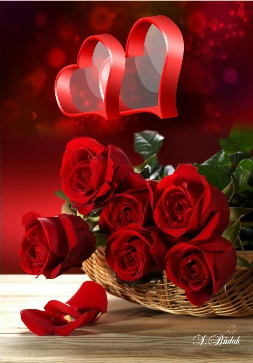Pin By Bozkr On Buketler Rose Dekor Pinterest Rose