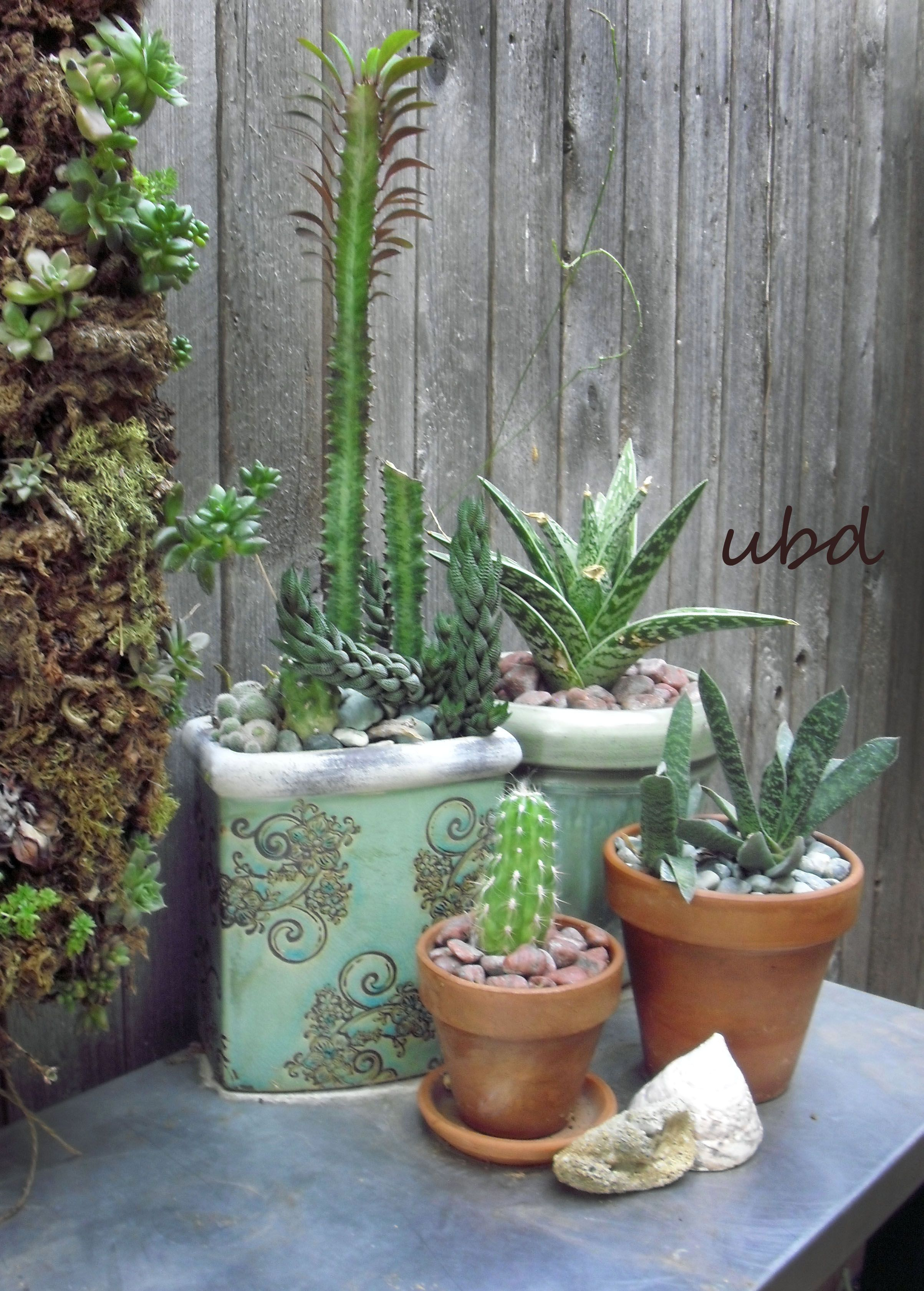 Lovely Succulent Containers