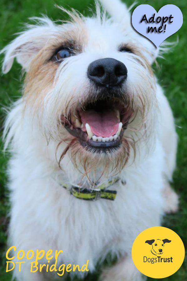 Dog rescue centre bridgend