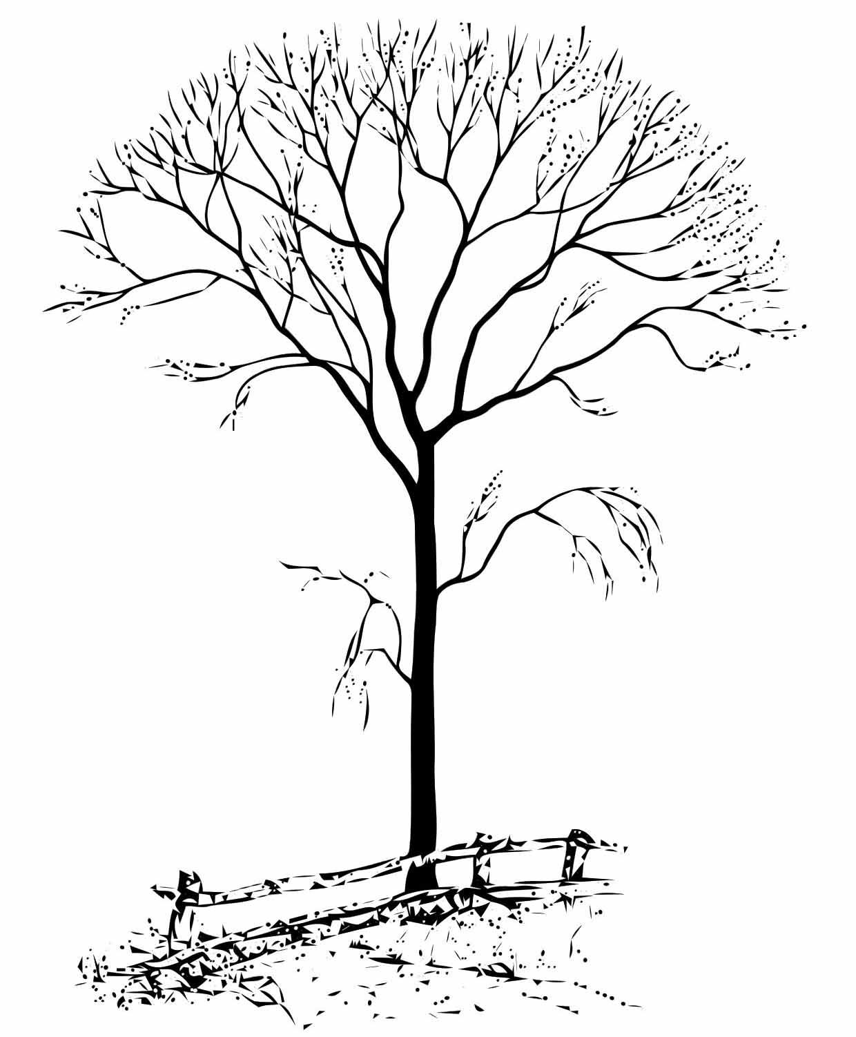 fall tree coloring page bing images - Birch Tree Branches Coloring Pages