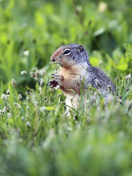 How To Get Rid Of Gophers Moles And Armadillos Getting Rid Of