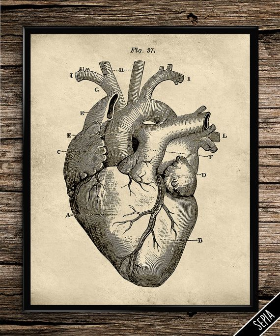Vintage Heart Cardiac Anatomy 5 Prints For 6 Vintage Heart