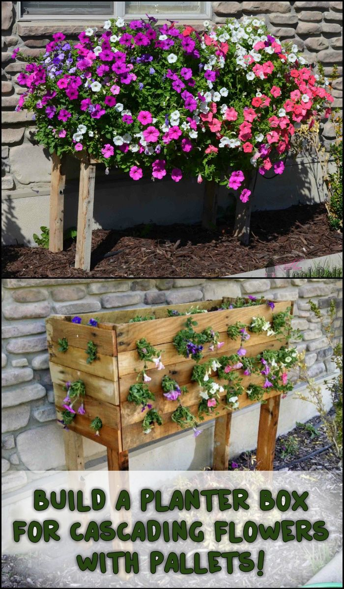 Bring more colour to your garden by