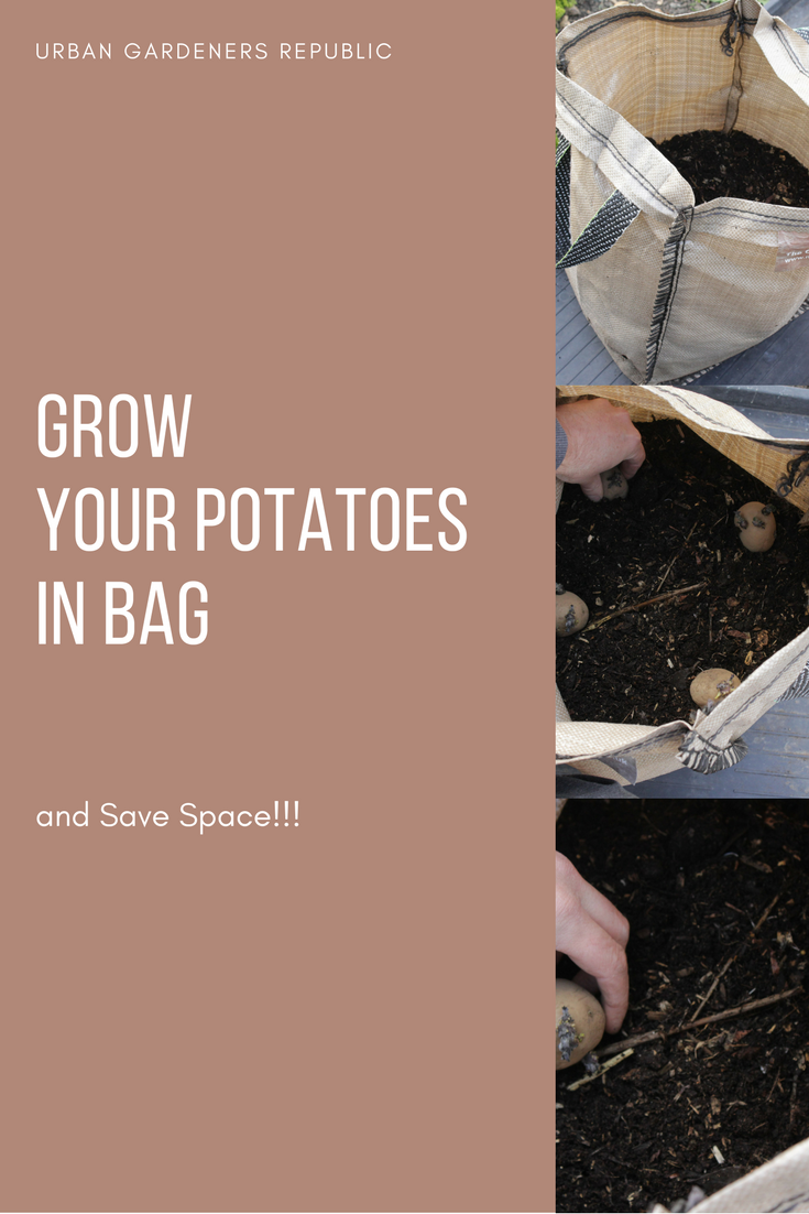 Grow Your Potatoes In Bags And Save Space Backyard Aquaponics