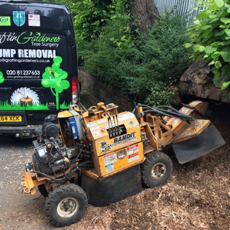 Looking for a fast and efficient stump removal service in