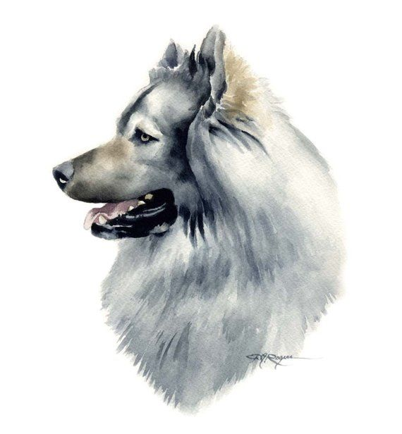 Eurasier Abstract Watercolor Painting Art Print by Artist DJ Rogers