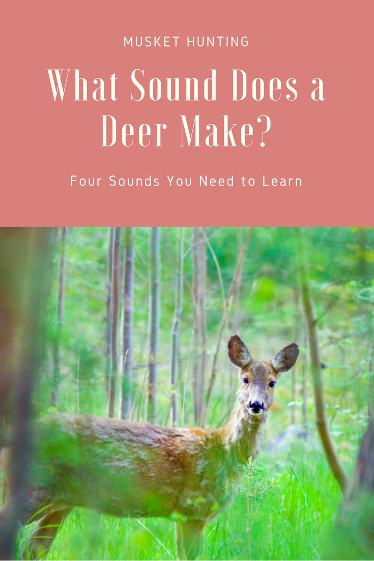 how to make deer sounds
