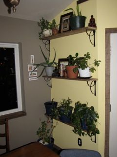 best gift ever: my own plant wall