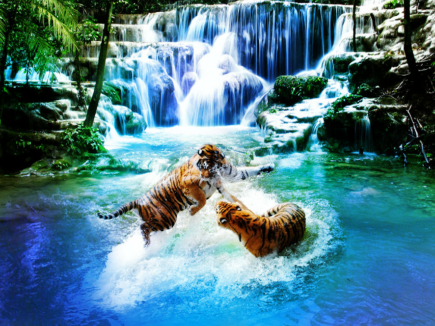 Fighting Tigers shared by Google. (With images) Animals