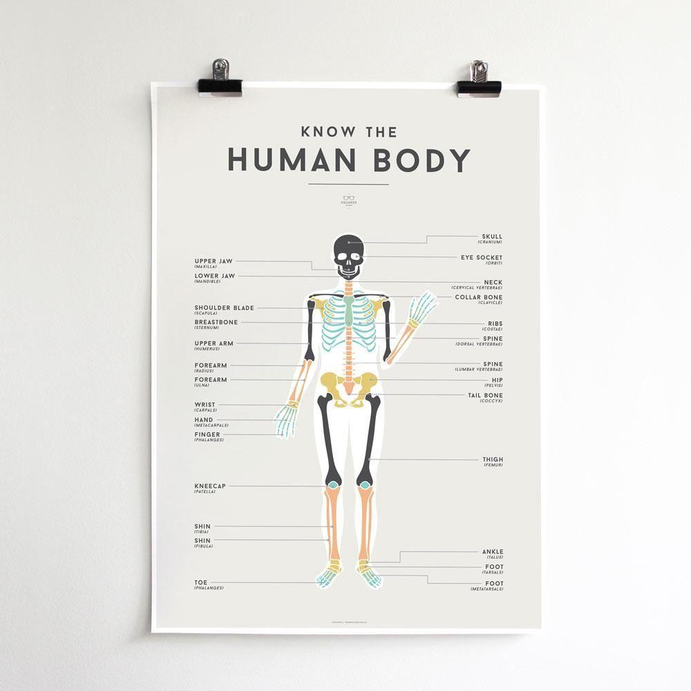 Squared Charts Human Body Body chart, Human body, Chart
