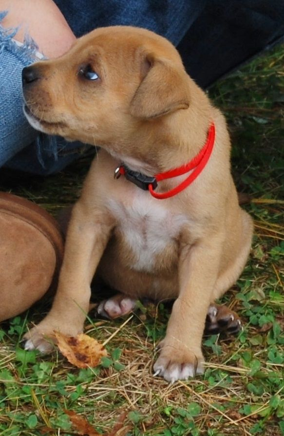 This Is Hooch He Was A Rescued Pitbull Puppy And Was Born With A