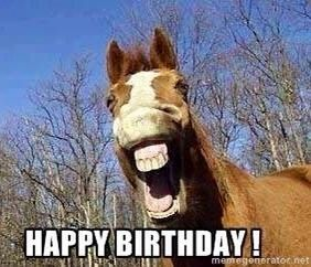 Horse Lover Funny Horse Happy Birthday Horse Funny Horse Pictures