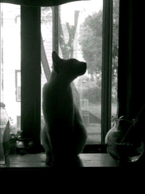 The cat !