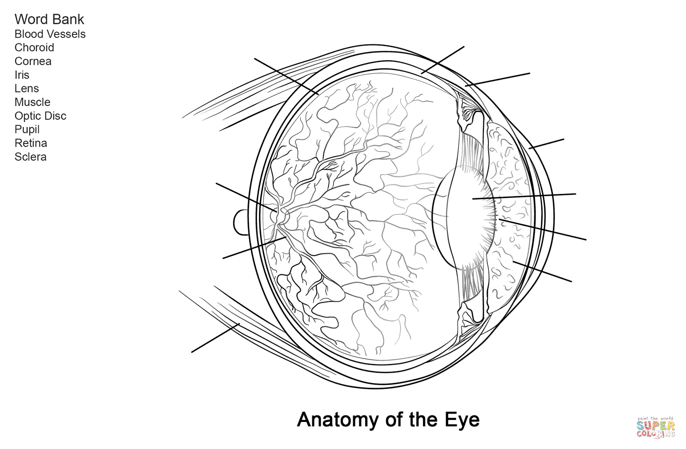 Human Eye Anatomy Worksheet Coloring Page From Anatomy