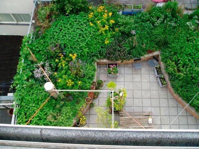 abc-azoteas Mom\u0027s garden Pinterest Azotea, Azoteas verdes y La