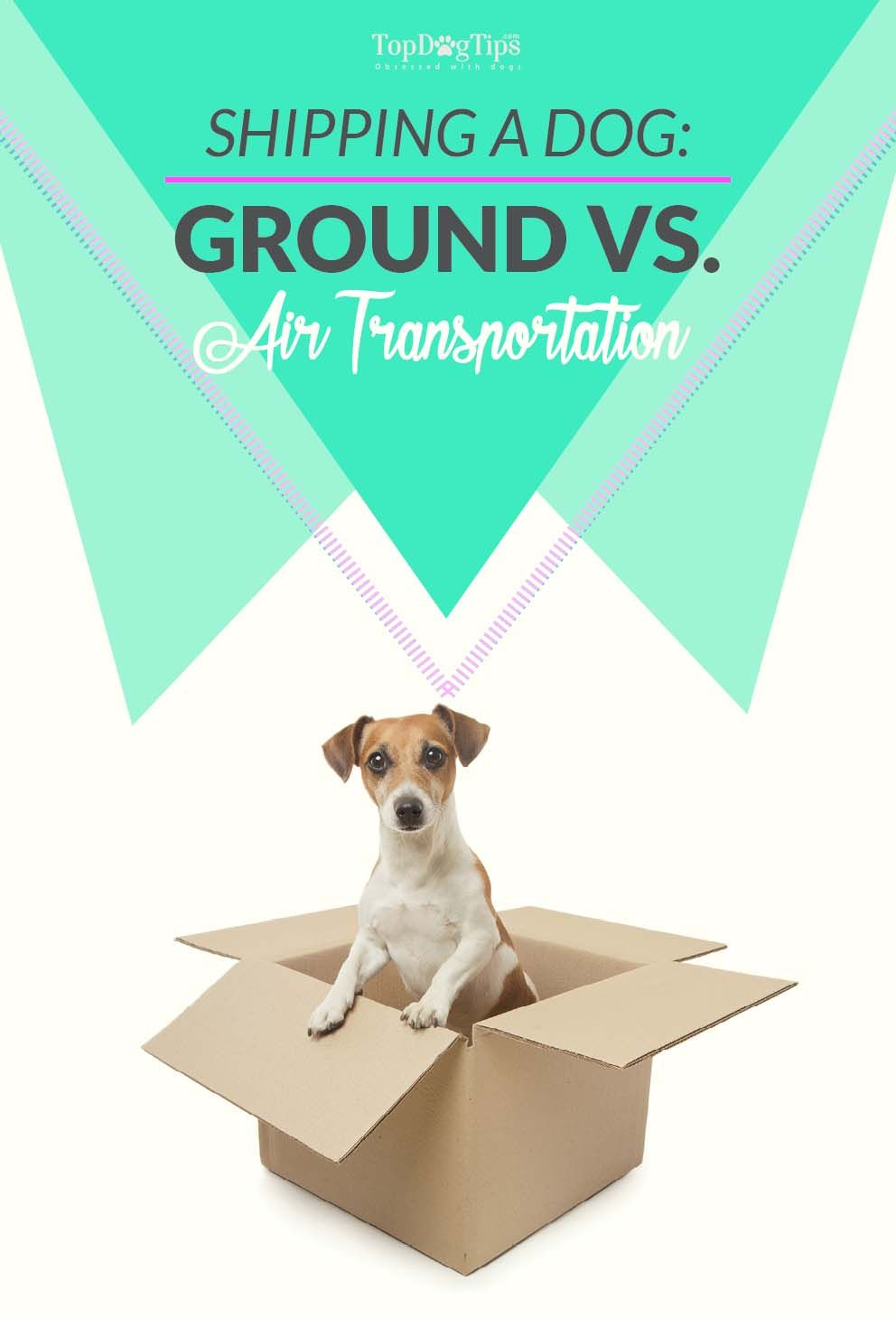 Shipping A Dog Using Ground Vs Air Transportation Dogs On Planes