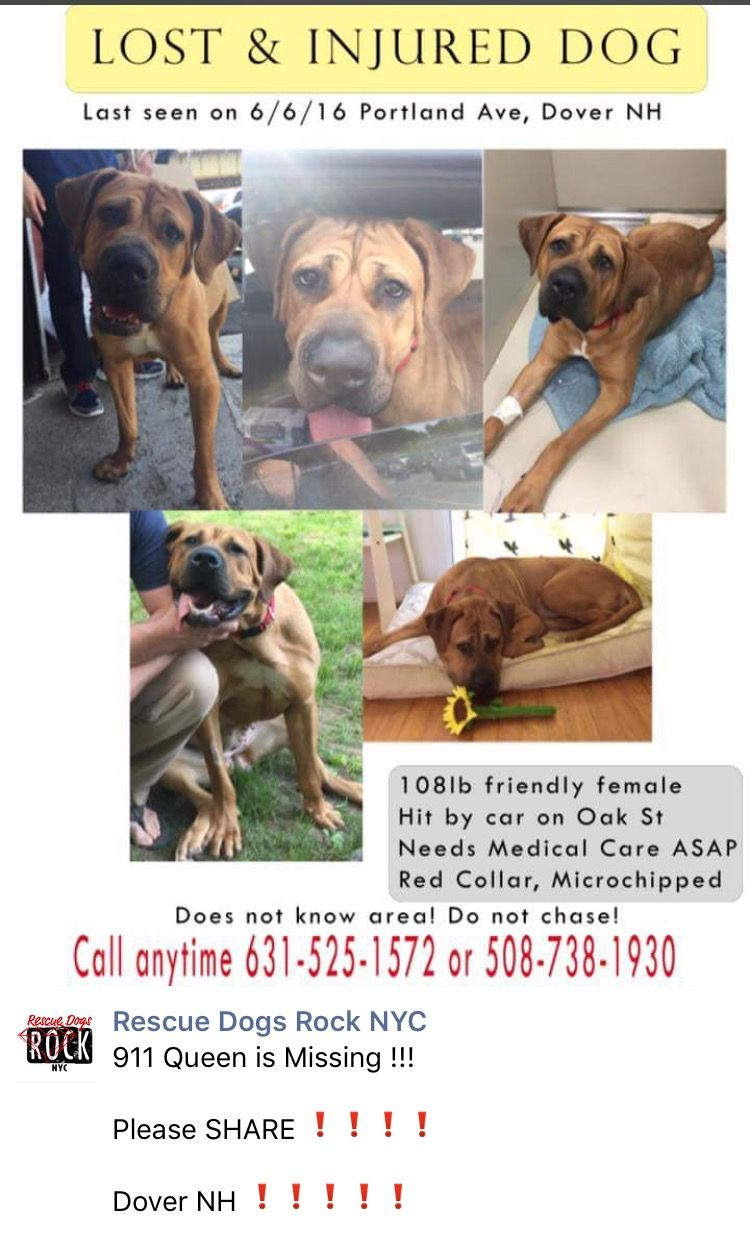 6/7/16 MISSING!!!! NYCACC SURVIVOR QUEEN IS MISSING/LOST