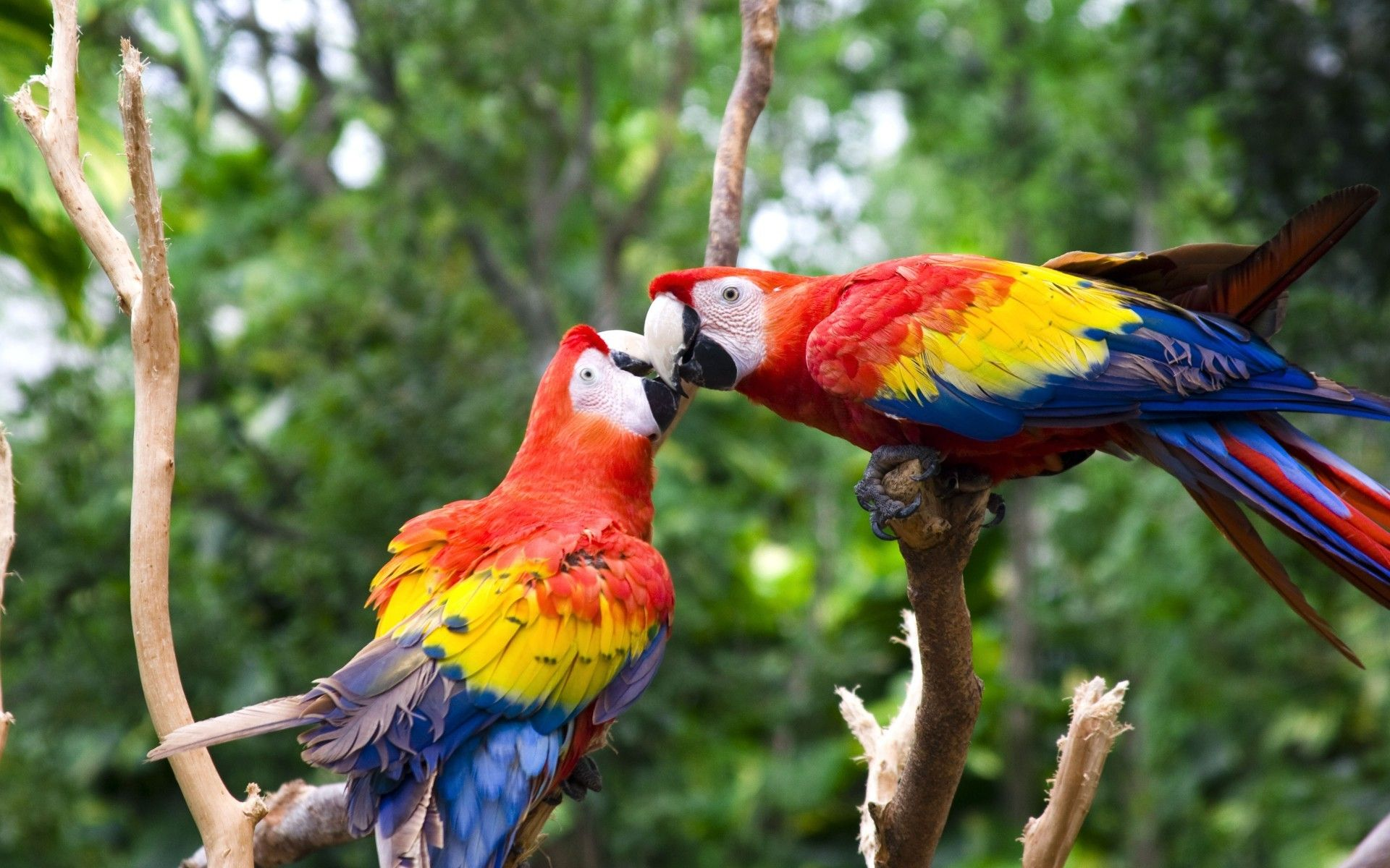 Cute Love Bird Colorful Parrot Hd Wallpapers Birds Wallpapers