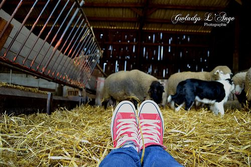 Red shoes with Sheeps #redshoes #sheep