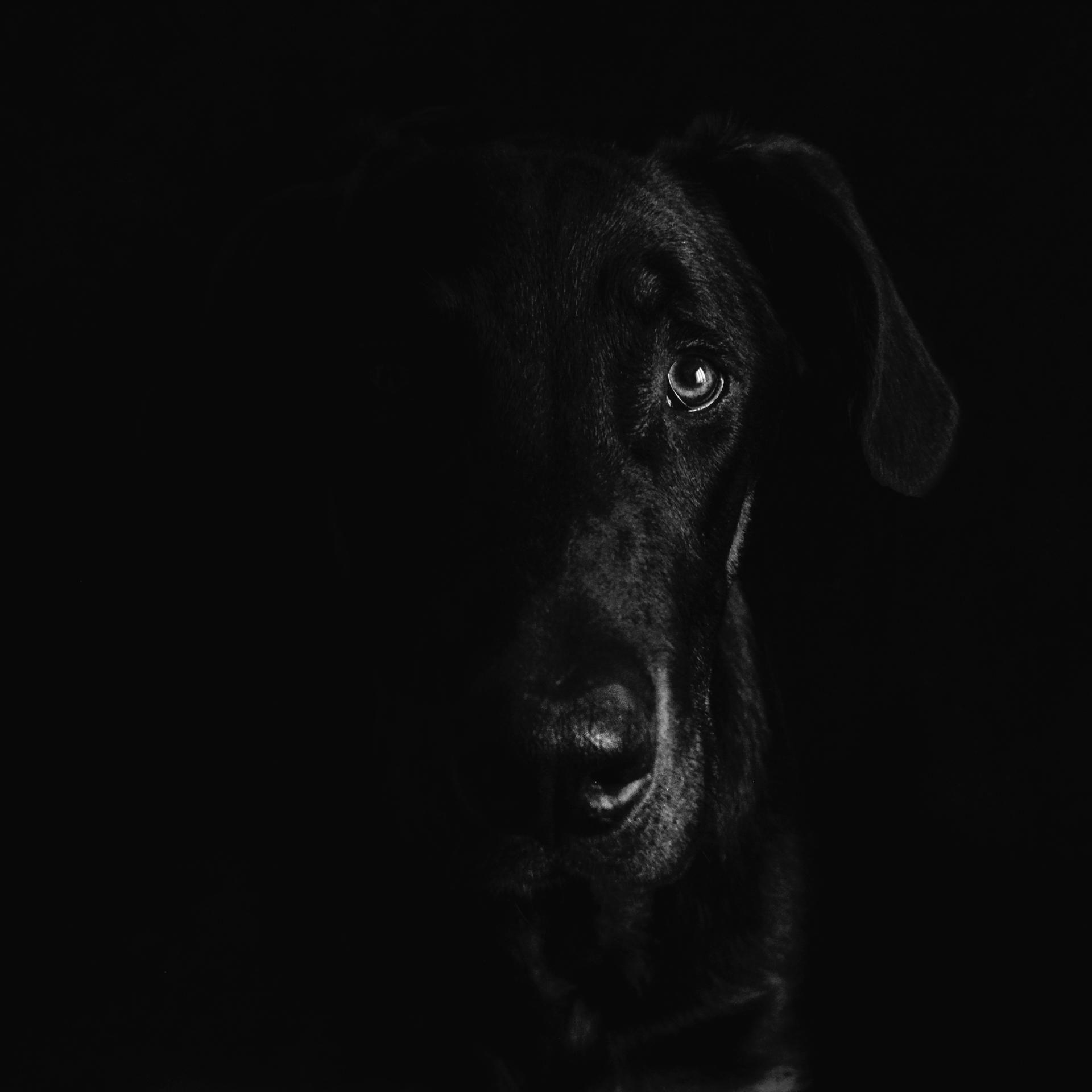de l 39 ombre la lumi re photographie artistique contemporaine noir et blanc chien. Black Bedroom Furniture Sets. Home Design Ideas