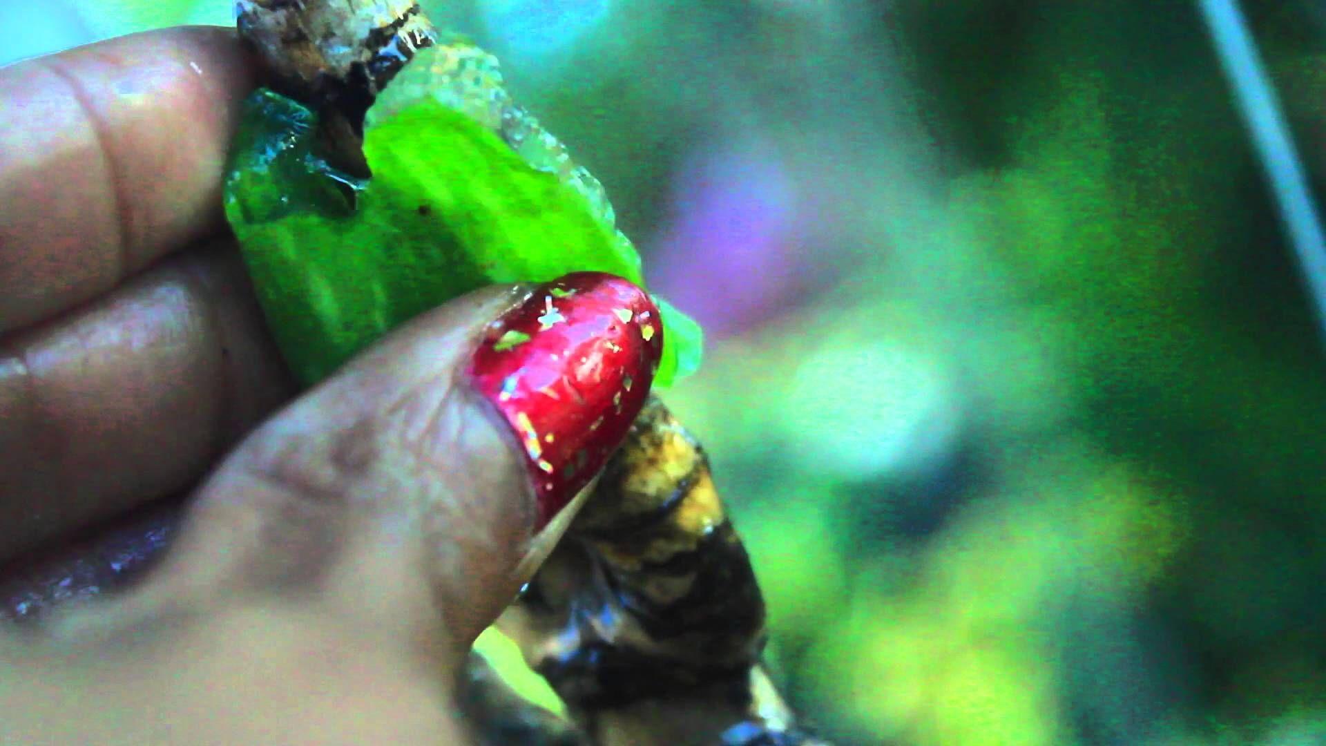 Orchid wrap u aloe vera treatment encourage new roots u keikis