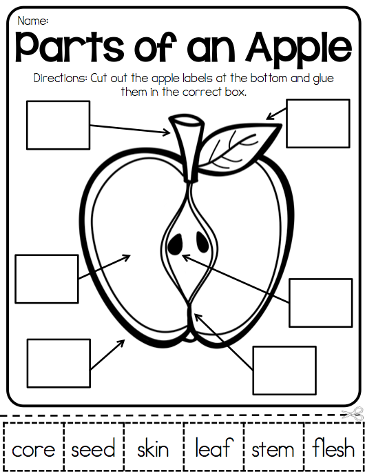Parts Of An Apple Apple Activities Teaching Pinterest