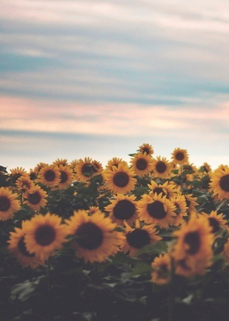 Image result for sunflowers tumblr